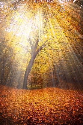 fall-sun-rays